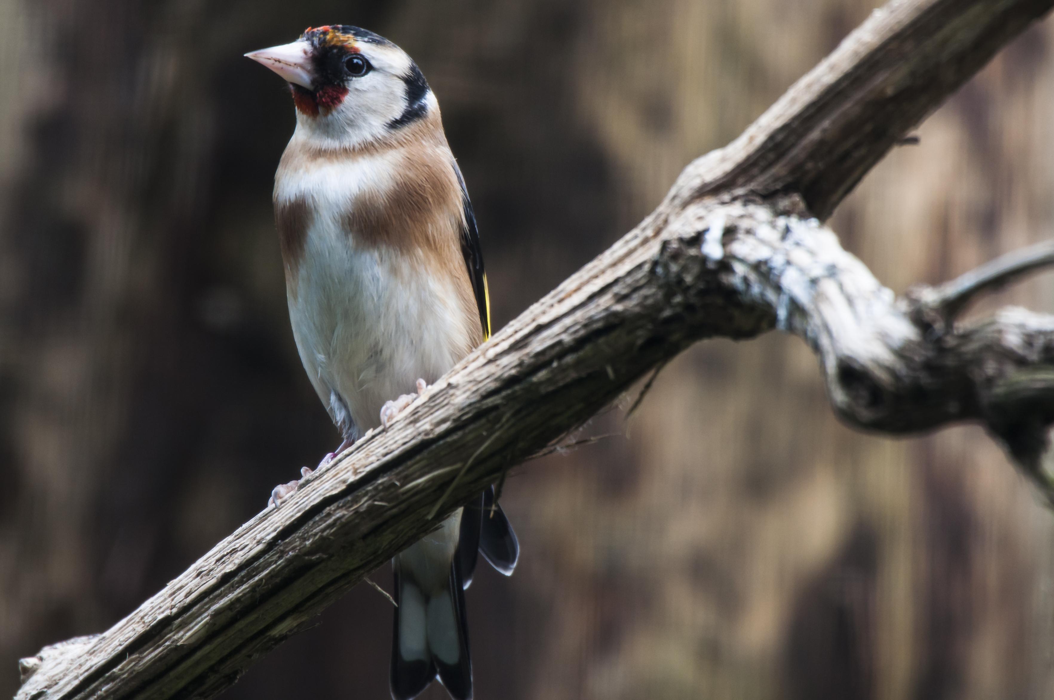 Vögel beobachten – Kurs für Einsteigende 2022