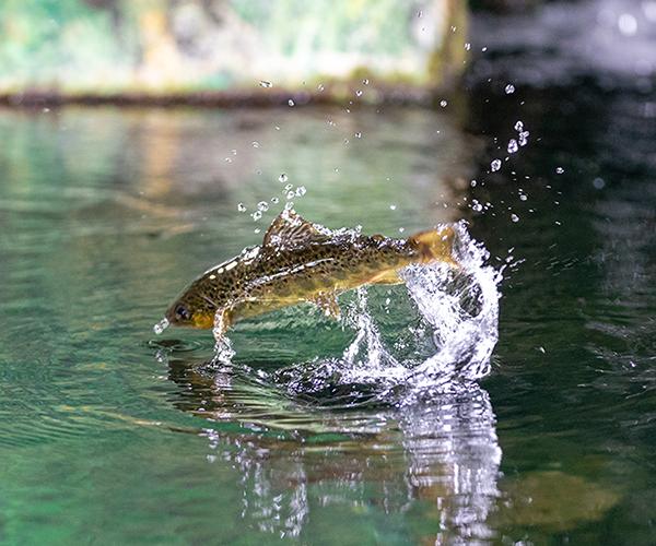 Fischereigrundkurs inkl. Schweizer Sportfischer Brevet
