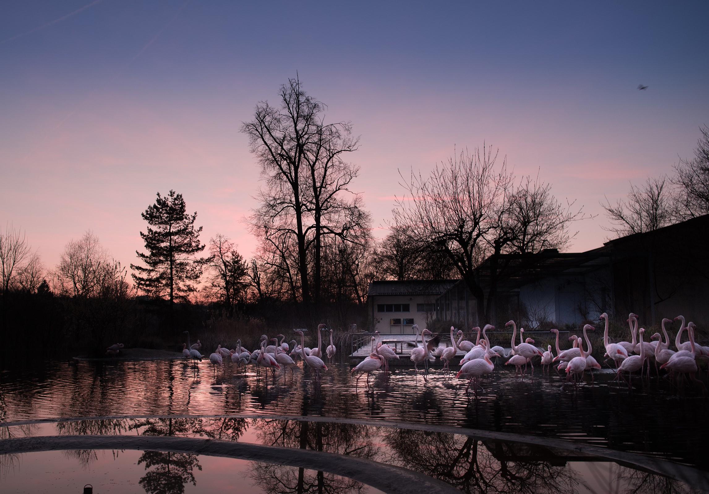 Winter-Vollmond im Tierpark